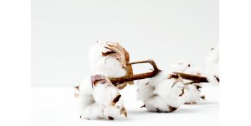 Beneficiile bumbacului - material de baza in productia iilor